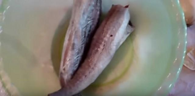 0-ryba