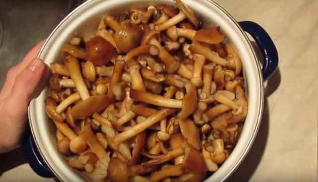 грибы готовы