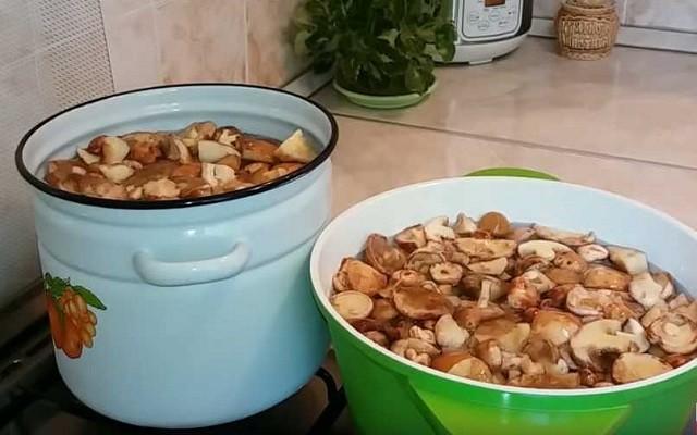 Как мариновать маслята  – самые вкусные рецепты заготовки на зиму