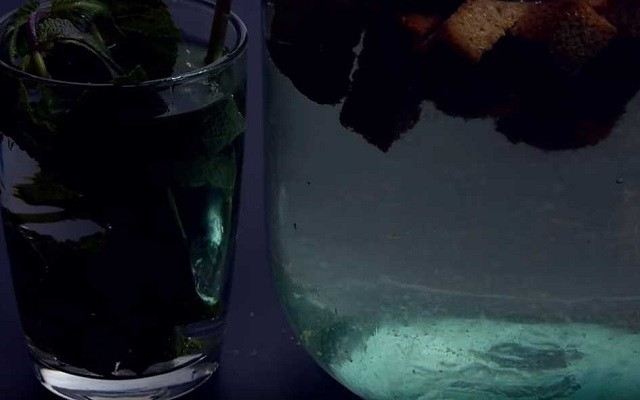 залить мяту водой