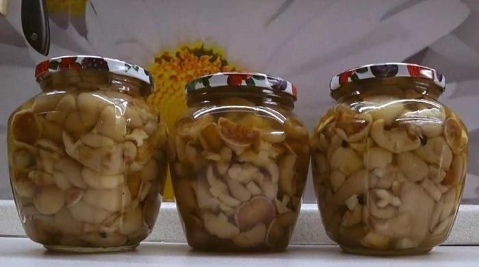 Рецепты приготовления маслят на зиму — жареные, маринованные, замороженные, солёные