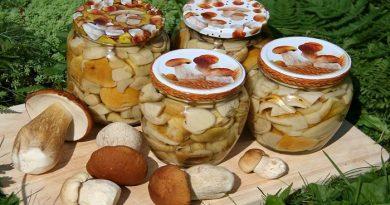 Простые рецепты приготовления белых грибов на зиму — различные способы заготовки