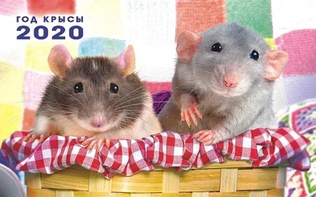 Особенности года Крысы